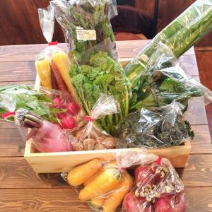 有機野菜「風の丘ファーム」さんの季節の有機野菜おまかせセット [冷蔵便]