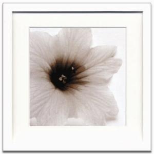 jk driggs アートフレーム ジェイアイジー(JIG) Blossom[Three] 【送料無料】|bicasa