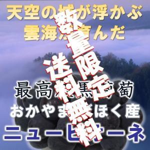 ニューピオーネ 農業大賞受賞日本一の産地岡山びほく産1kg以上2房 bicchu