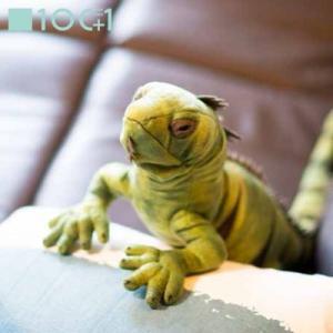 ☆ ぬいぐるみ101 爬虫類のヌイグルミ イグアナ SM105|bigstar