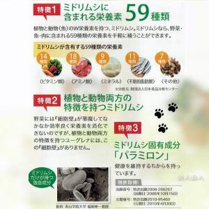 (送料無料)モグレナ 30g(正規取扱店)愛犬ペットサプリ ミドリムシのちからがリニューアル(ユーグレナ サプリメント ミドリムシ あすつく|bijinsyokunin|05
