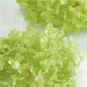 ソフトアナベル・ヘッド*クリアグリーン|billioflower