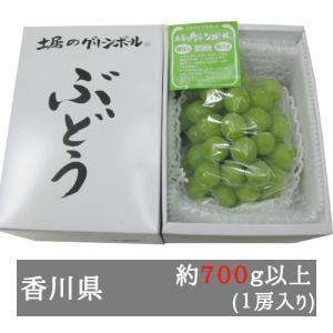 土居さんのグリーンボール(シャインマスカット) 1房入り約700g以上 香川県産 bimi-shunka