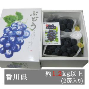 ニューピオーネ 大房2房入り(1房600g以上) 香川県産 bimi-shunka