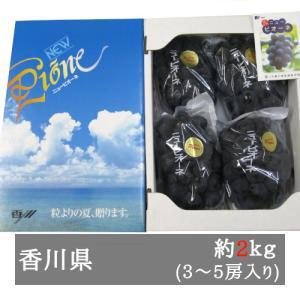 ニューピオーネ 約2kg入り 3-5房  香川県産 bimi-shunka