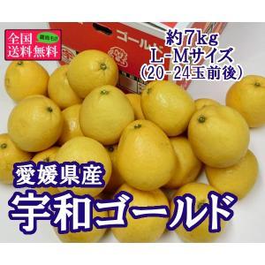 宇和ゴールド 約7kg L-Mサイズ(20-24玉前後) 愛媛県産|bimi-shunka