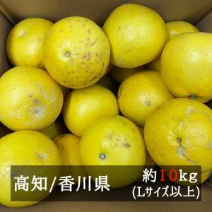 訳あり土佐文旦 サイズおまかせ 約10kg 高知県産