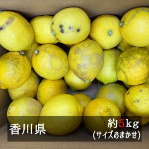訳ありさぬきレモン 約5kgサイズ混合 香川県産...