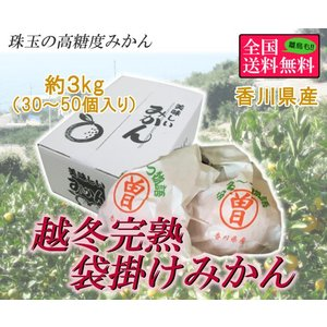 越冬完熟袋掛けみかん  約3kg (30-50個入り) 香川県産
