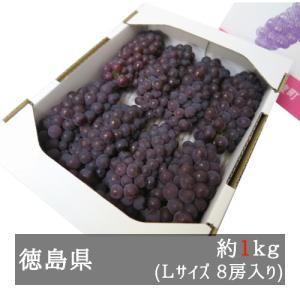 ハウスデラウェア 約1kg Lサイズ(8房入り) 徳島県産 bimi-shunka