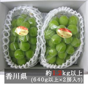 シャインマスカット 2房入り(1kg以上) 香川県産 bimi-shunka