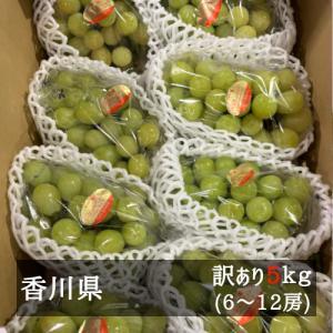 訳ありシャインマスカット 約5kg(6‐9房入り) 香川県産 bimi-shunka