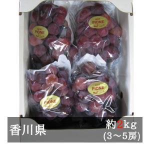 訳ありピオーネ 約2kg入り(3‐5房) 香川県産 bimi-shunka
