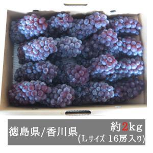 ハウスデラウェア 約2kg Lサイズ(16房入り)徳島県産または香川県産 bimi-shunka