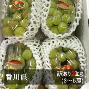 訳ありシャインマスカット 約2kg(3-5房入り) 香川県産 bimi-shunka