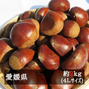 ■4Lサイズ 約3kg入り  中山栗は、食味がよくて大玉のものが多く 「日本一の中山栗」と言われる愛...
