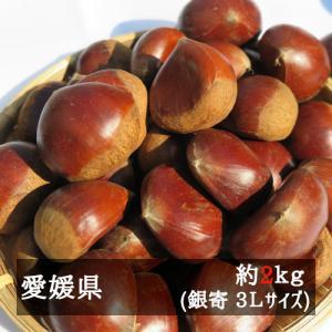 銀寄(中山栗) 3Lサイズ約2kg入り 愛媛県産 bimi-shunka
