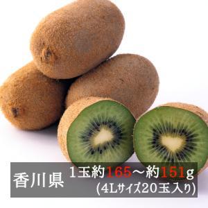 香緑キウイ(スイート16)4L 20玉入り 香川県産