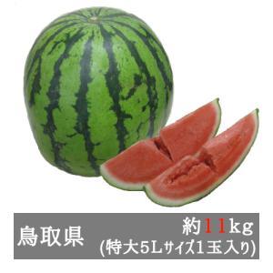 訳あり大栄西瓜 特大5Lサイズ(約11kg) 鳥取県産...