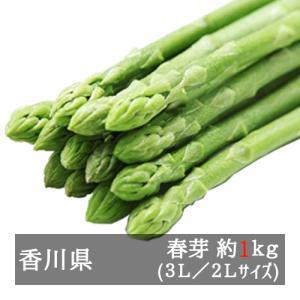 香川県オリジナルアスパラガス 極太さぬきのめざめ 約1kg 3L/2Lサイズ