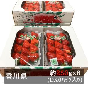 DXさぬきひめいちご 約270g×6パック 香川県産
