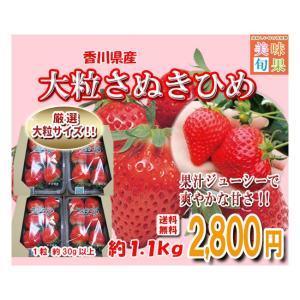 大粒さぬきひめいちご 約1.1kg 香川県産...