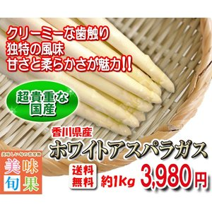 ホワイトアスパラガス 約1kg 香川県産