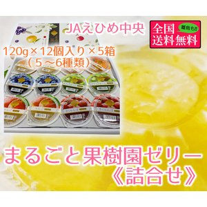 まるごと果樹園ゼリー詰合せ 155g×12個入り(6種類)5箱セット JAえひめ中央 bimi-shunka