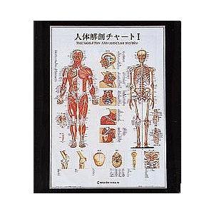 人体解剖チャート1【鍼灸】【ポスター・パネル】|biomedicalnet