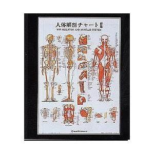 人体解剖チャート2【鍼灸】【ポスター・パネル】|biomedicalnet