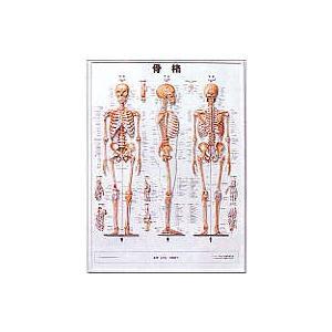 3D人体チャート【鍼灸】【ポスター・パネル】|biomedicalnet