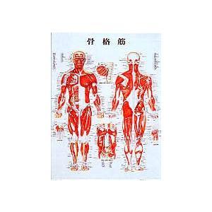 ポスター70×51cm【鍼灸】【ポスター・パネル】|biomedicalnet