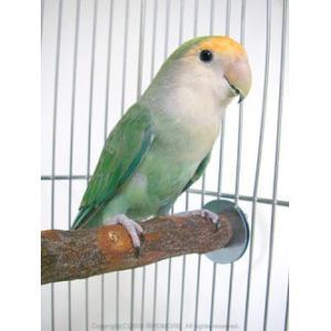 カワイ / ニームパーチS / 9992256 birdmore
