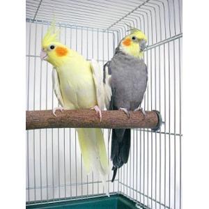 カワイ / ニームパーチM / 9992257 birdmore