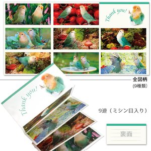 tokyoShiori / 蛇腹メモ01/コザクラインコ / 245A0214