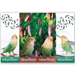 tokyoShiori / 四連栞/コザクラインコ / 245A0219