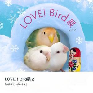 tokyoShiori / LOVE!Bird展公式カタログ2/コザクラインコ / 245A0238