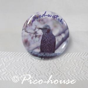ぴこはうす / 缶バッジ ヒヨドリ / 056A0211  ネコポス 対応可能 ( BIRDMORE バードモア 鳥グッズ 鳥用品 雑貨 鳥 バード プレゼント )|birdmore