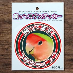 TOMO YAMASHITA DESIGN STUDIO.  飼ってますステッカー コザクラインコ 195A0364  ネコポス 対応可能 インコサミット バードモア 鳥用品 鳥グッズ|birdmore