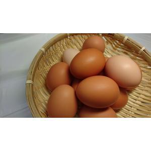 庭鶏の卵4ケース24個|birthplace