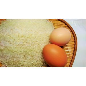 【あきたこまち】A5kg「白米」と卵4ケース(24個入)のセット【秋田県産】【令和元年産】【送料無料】|birthplace