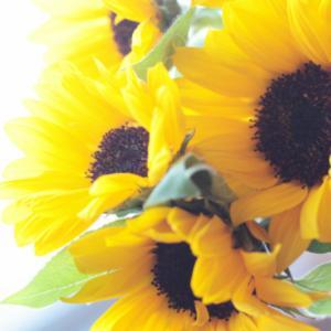 ヒマワリ 花束 お好きな本数 10本から 花束 向日葵 ひまわり 夏に人気 誕生日 お祝い プレゼント