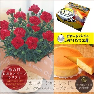 母の日プレゼント(ギフト)2018・ カーネーション鉢植え(5号鉢)と「ビアードパパの作りたて工房」チーズケーキのセット[母の日カード付・送料無料] bishokuc