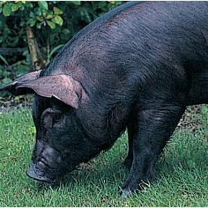 沖縄・やんばる島豚・やんばる豚・焼肉セット(バラ焼肉食べ比べ)(焼肉セット・バーベキューセット)|bishokuc