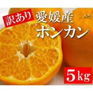 訳あり 愛媛産 ポンカン 5kg|bishokuc