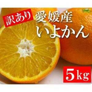 訳あり 愛媛産 いよかん 5kg|bishokuc