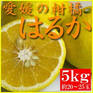 訳あり・愛媛産酸の味がない柑橘 はるか 5kg(約20〜25玉)|bishokuc