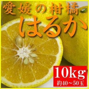 訳あり・愛媛産酸の味がない柑橘 はるか 10kg(約40〜50玉)|bishokuc