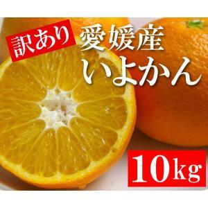 訳あり 愛媛産 いよかん 10kg|bishokuc