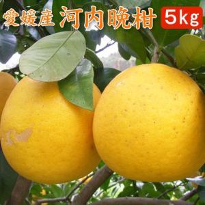 愛媛産・河内晩柑(美生柑)5kgご自宅用|bishokuc